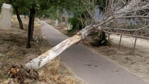 Un sorpresivo y fuerte viento causó importantes daños