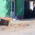 """Vecinos indignados por una """"poda criminal»"""