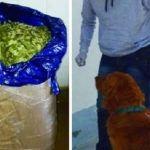 """El perro """"Coquena"""" detectó en la terminal una encomienda con 21 kilos de hojas de coca"""
