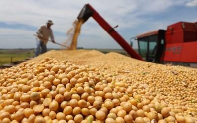 No a todos les va mal: sectores agroexportadores acumulan riqueza en medio de la pandemia