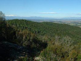Vista des de la Serra de Cals a les Gavarres / Pitu