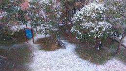 la bisbal nevada