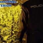 Plantació de marihuana a Sant Feliu de Guíxols | Imatge de la Policia Nacional