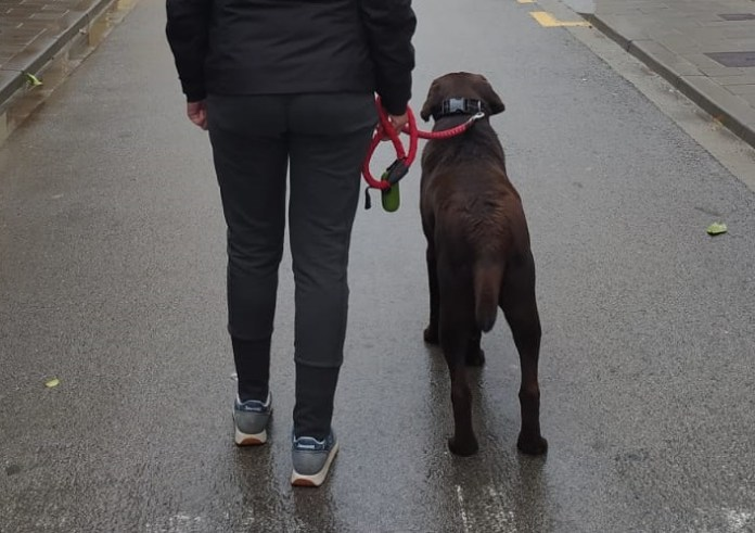 privat:-ban-d'alcaldia-sobre-la-normativa-per-treure-a-passejar-els-gossos-durant-el-confinament