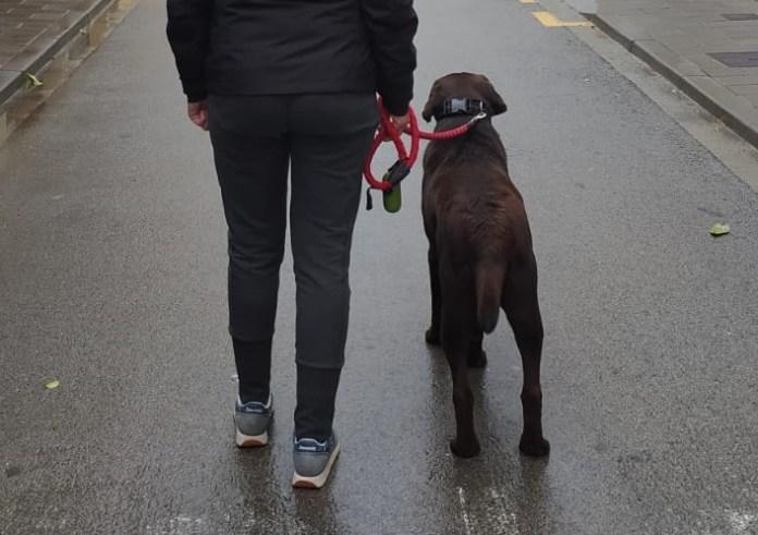 Sortir a passejar el gos durant el confinament pel coronavirus