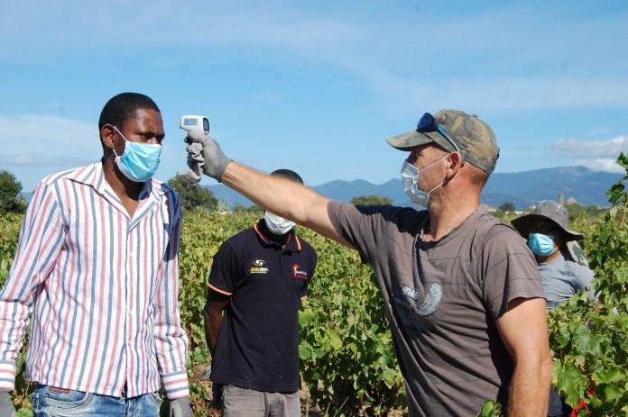 Un responsable pren la temperatura als treballadors del camp | Imatge de la DO Empordà