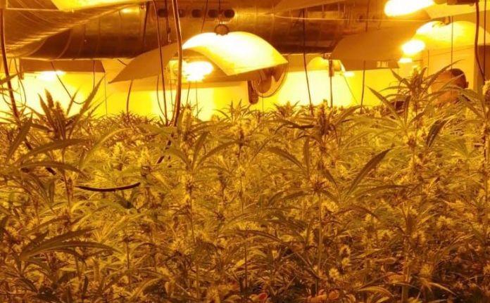 Plantació de marihuana a Palamós | Imatge dels Mossos d'Esquadra