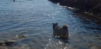 Cala per a gossos a Sant Feliu de Guíxols