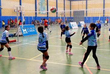 36 equipos de Minivoley de toda la provincia de Huelva se citan en Cartaya dentro de una jornada espectacular para los más pequeños