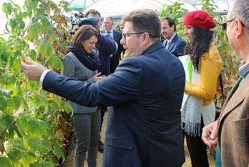 Respaldo institucional a la labor de investigación que en materia de frutos rojos se realiza en Cartaya