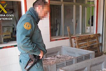 San Juan del Puerto | Intervenidos 860 kg. de pulpo sin etiquetar