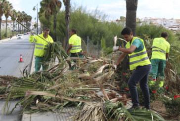 Comienza la campaña de limpieza y poda de palmeras en Cartaya