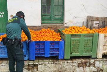 Gibraleón | La Guardia Civil interviene 2.7000 kilos de naranjas que habían sido sustraídas en una finca del término municipal