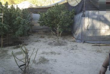 Ocho detenidos en un dispositivo contra el consumo y tráfico de drogas en la localidad de Moguer y Bonares