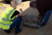 Gibraleón | La Guardia Civil interviene un total de 30 aves fringílidas que habían sido capturadas ilegalmente en la localidad