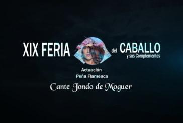 Cartaya Tv | Feria del Caballo 2020: Peña Flamenca de Cante Jondo de Moguer