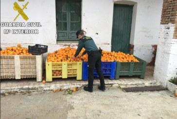 Gibraleón   La Guardia Civil recupera 1.100 kg. de naranjas que habían sido sustraídas en una finca de la localidad