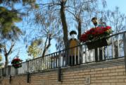 El Ayuntamiento da color a la Navidad cartayera con la colocación de más de 350 flores de pascua