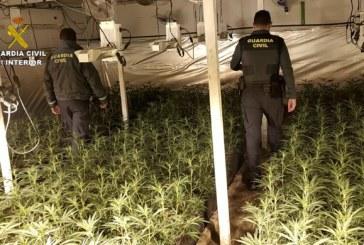 La Nava | La Guardia Civil interviene 1.488 plantas de marihuana en la localidad