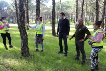 El Ayuntamiento pone en marcha labores de control y señalización para optimizar el aprovechamiento sostenible de la madera del pinar