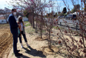 El Ayuntamiento acomete la plantación de más de 160 árboles y arbustos en Cartaya, El Rompido y Nuevo Portil