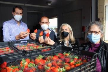La alcaldesa traslada el apoyo municipal al sector, en la jornada en la que Interfresa celebra el Día Mundial de los Frutos Rojos