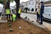 El Ayuntamiento repone con nuevas plantas la Barriada Blas Infante y otras zonas ajardinadas de la localidad