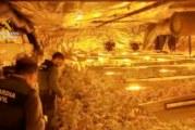Gibraleón  | La Guardia Civil desmantela una plantación de marihuana en una nave en la localidad