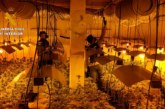 Almonte | La Guardia Civil realiza una operación contra el cultivo de marihuana en la localidad incautando 394 plantas