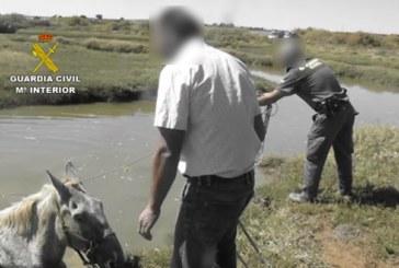 Lepe | La Guardia Civil colabora en el rescate de un caballo que se había caído en un caño de las marismas del río Piedras