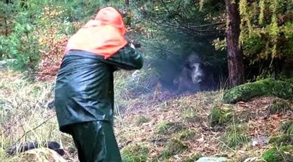 Provincia di Frosinone – Domenica apertura della caccia al cinghiale. Informazioni e raccomandazioni per i cacciatori