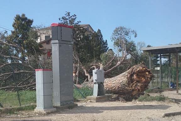 Albero caduto in via Casilina Nord, da Fb