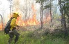 Chiloé: autoridades llaman a prevenir incendios forestales.