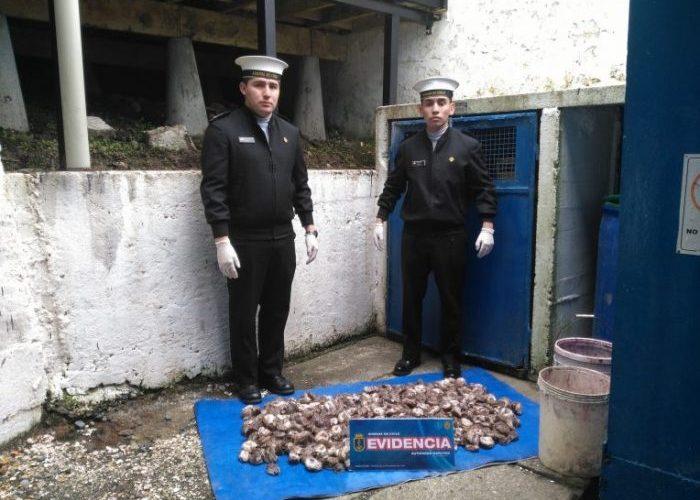 Ancud: Capitanía de Puerto incauta recurso loco.