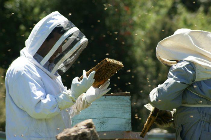 Regional: Seremi de Agricultura invita a contratar seguro para apicultores.