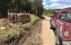 Ancud: detienen a cuatro individuos por tala ilegal de bosque nativo.