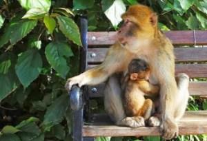 macaca e filho