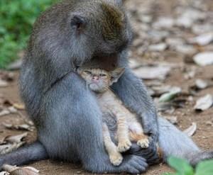 Macaco-gato