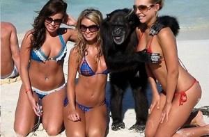 macaco e mulheres