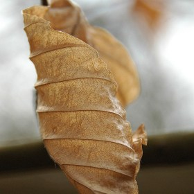 You say what - leaf photo by Tim Baker