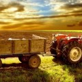 αγροτης γεωργος χωραφι
