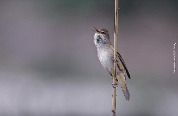 Ευρωπαϊκή Ημέρα Natura 2000