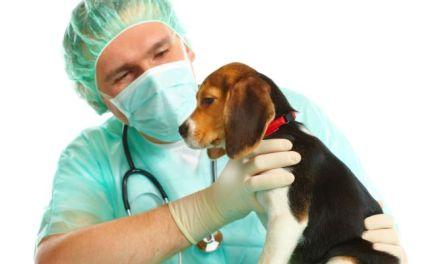 Vamos todos a castrar nuestras mascotas!!!