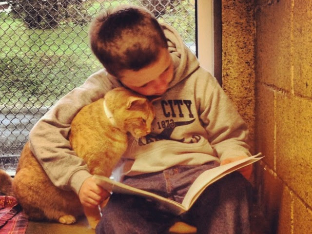 La simbiosi gatto 🐱 e bambino 👶