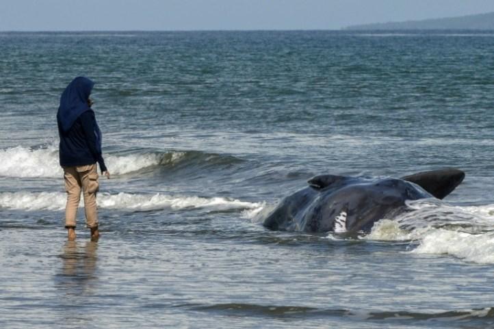 Las ballenas boreales, prolíficas compositoras e intérpretes (estudio) - daaf7f228de494c4bdc4c859a3b486257185ae0c-300x200