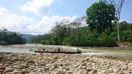 Grupos armados desplazan a líder de sustitución de cultivos en Nechí (Antioquia) - aherminagua