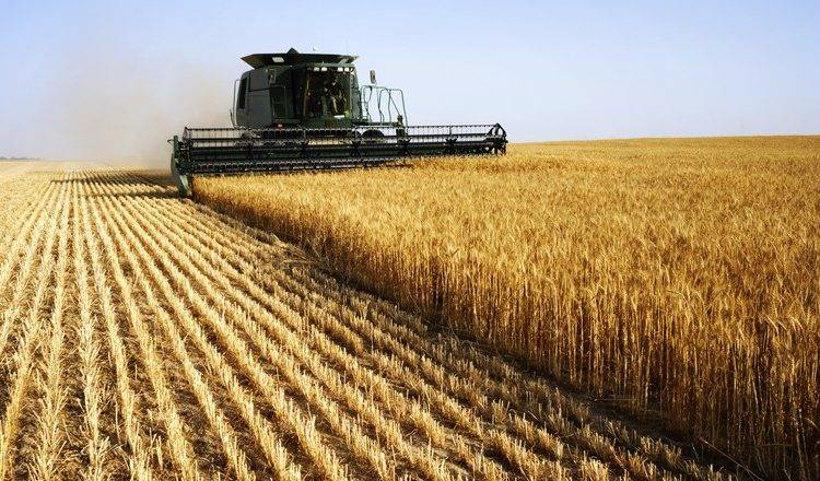 Colheita do trigo está quase concluída no RS