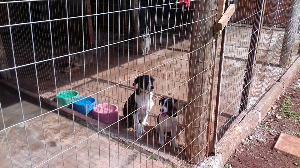 Acopan promove feira de adoção de animais neste sábado