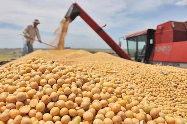 Caso o clima ajude, entidades do agro esperam preços compensadores já no período de inverno