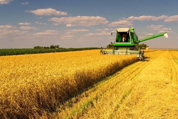 Presidente da Fecoagro defende taxa menor de importação para não sofrermos com falta de abastecimento